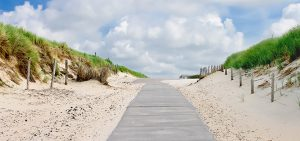 The road in dunes to the beach. Netherlands